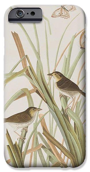 Macgillivray's Finch  IPhone 6s Case by John James Audubon
