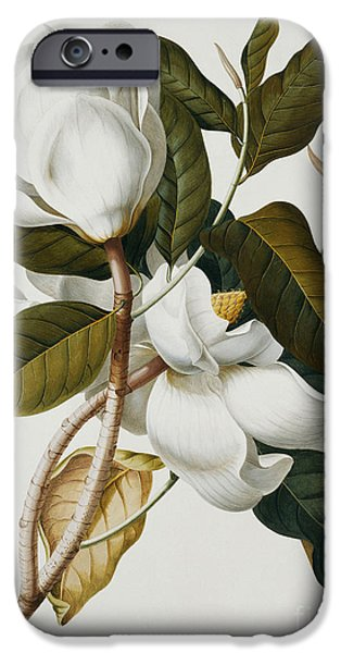 Magnolia IPhone Case by Georg Dionysius Ehret