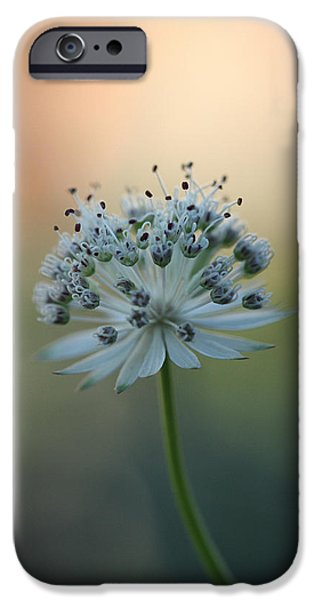 Make A Wish  IPhone Case by Connie Handscomb