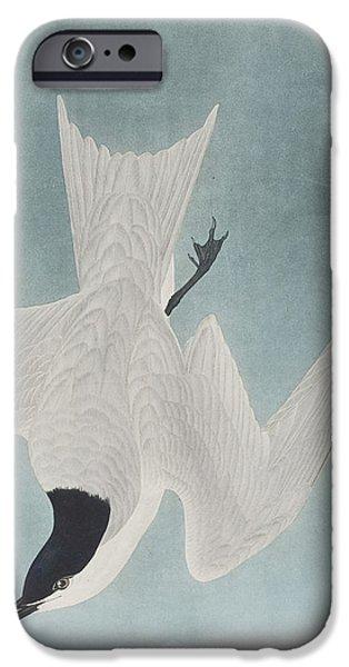 Marsh Tern IPhone Case by John James Audubon