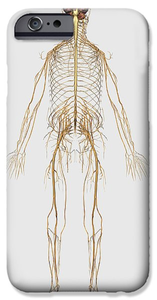 Medical Illustration Of Peripheral IPhone Case by Stocktrek Images