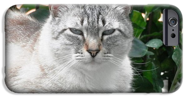 Meet Barney The Cat IPhone Case by Belinda Lee