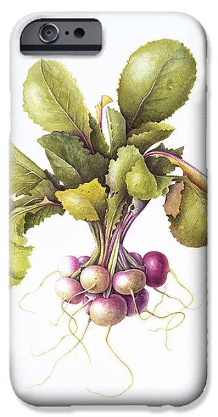 Miniature Turnips IPhone Case by Margaret Ann Eden