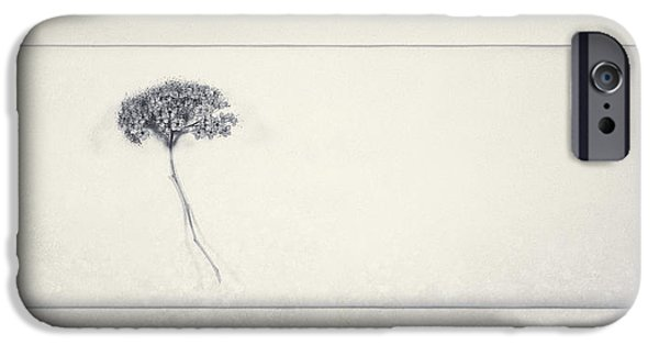 Miracle Of A Single Flower IPhone Case by Scott Norris