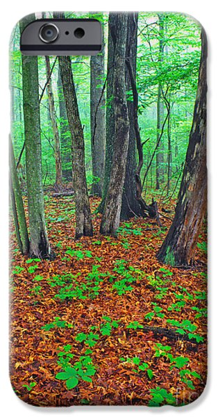 Misty Forest IPhone Case by Thomas R Fletcher