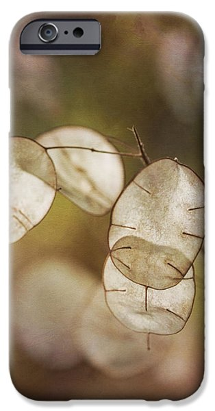 Money Plant IPhone Case by Dale Kincaid