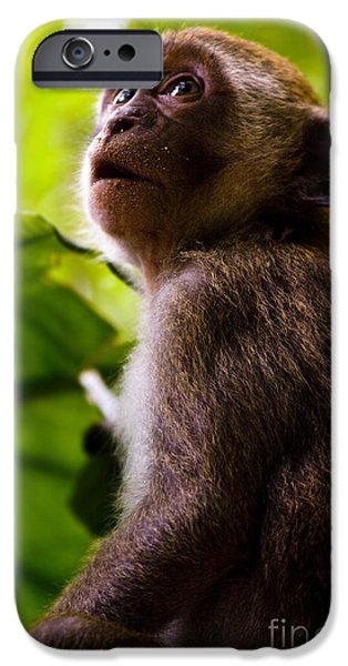 Monkey Awe IPhone Case by Jorgo Photography - Wall Art Gallery