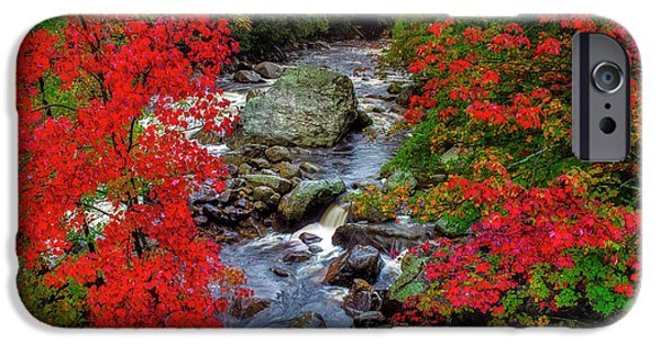 Natures Frame IPhone Case by Mark Papke