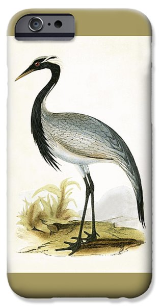 Numidian Crane IPhone 6s Case by English School