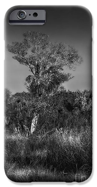 Oak And Palm IPhone Case by Marvin Spates