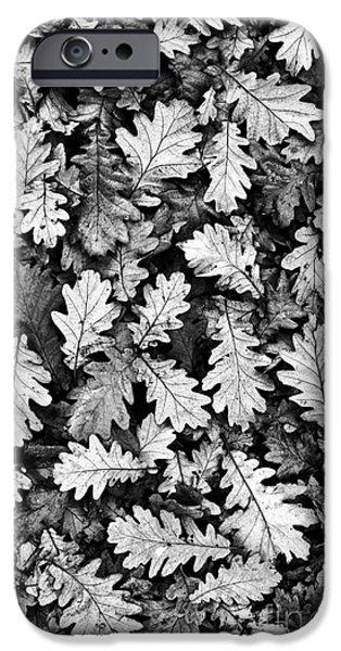 Oak IPhone Case by Tim Gainey