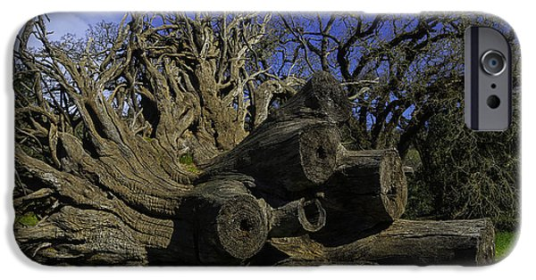 Old Tree Roots IPhone Case by Garry Gay