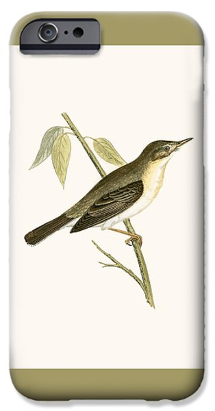 Olivaceous Warbler IPhone Case by English School