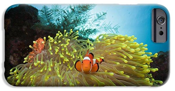 Orange Clownfish IPhone Case by Reinhard Dirscherl