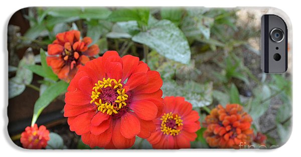 Orange Flowers IPhone Case by Amy Lucid