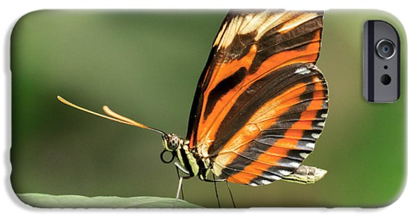 Orange Tiger Butterfly IPhone Case by Lucid Mood