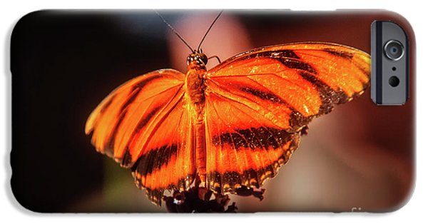 Orange Tiger Butterfly IPhone Case by Robert Bales