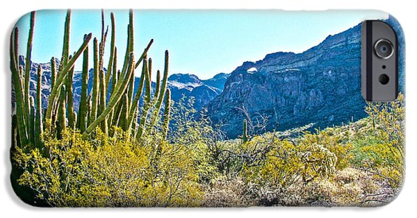 Organ Pipe Cactus In Arch Canyon In Organ Pipe Cactus National Monument-arizona  IPhone 6s Case by Ruth Hager