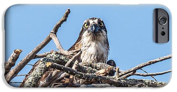 Osprey Eyes IPhone 6s Case by Paul Freidlund