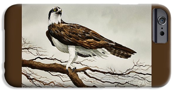 Osprey Sea Hawk IPhone 6s Case by James Williamson