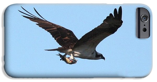 Osprey With Fish IPhone 6s Case by Carol Groenen