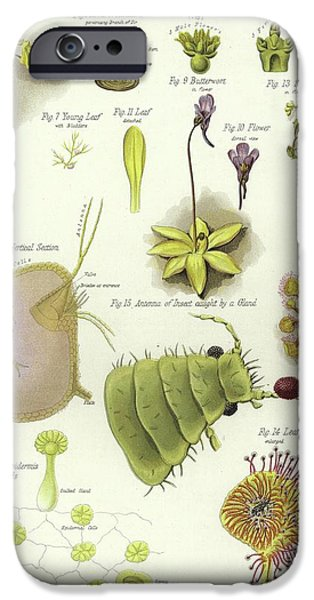 Parasites And Insectivorous Plants IPhone Case by English School