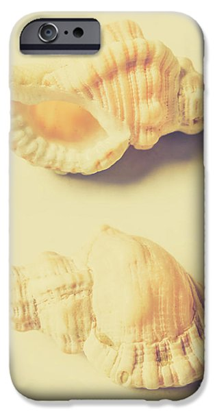 Pastel Seashell Fine Art IPhone Case by Jorgo Photography - Wall Art Gallery