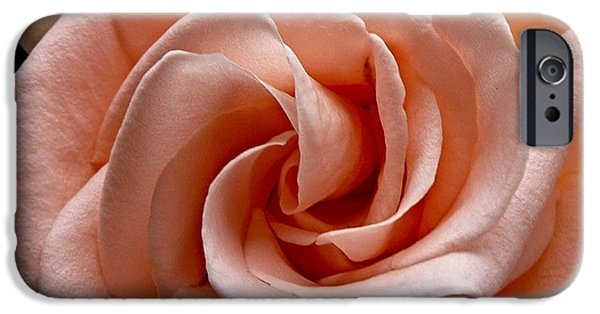 Peach-colored Rose IPhone 6s Case by Sean Griffin