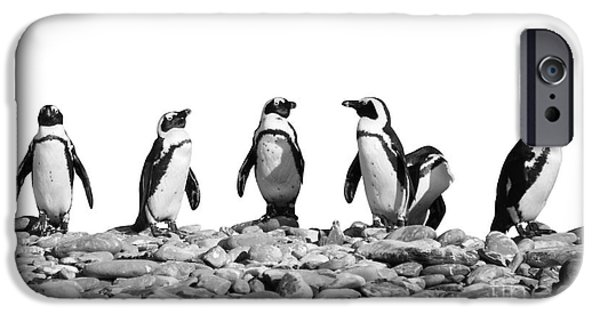 Penguins IPhone Case by Delphimages Photo Creations