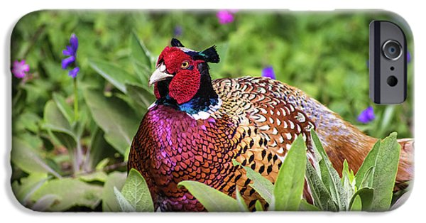 Pheasant IPhone 6s Case by Martin Newman