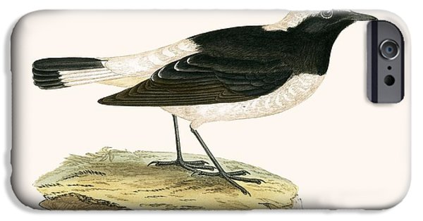 Pied Wheatear IPhone 6s Case by English School