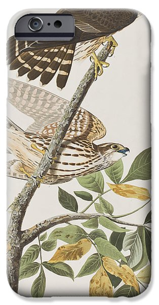 Pigeon Hawk IPhone 6s Case by John James Audubon