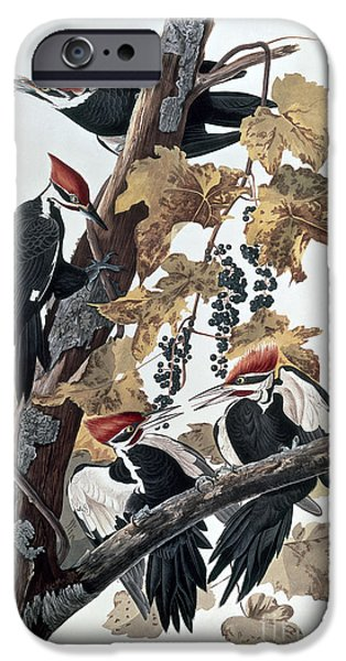 Pileated Woodpeckers IPhone Case by John James Audubon