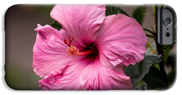 Pink Hibiscus Close  IPhone Case by Zina Stromberg