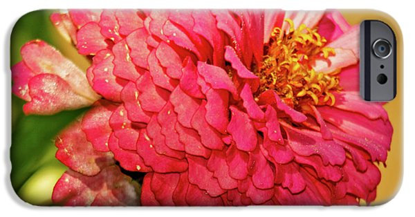 Pink Zinnia Fresh From The Garden IPhone Case by Carol F Austin