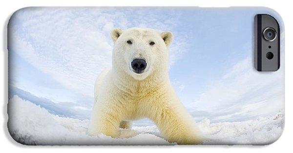Polar Bear  Ursus Maritimus , Curious IPhone 6s Case by Steven Kazlowski