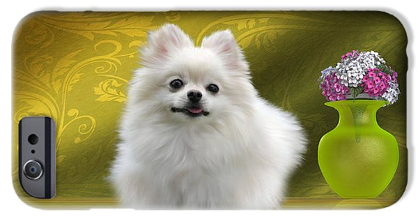 Pomeranian Dog IPhone Case by Corey Ford