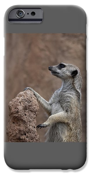Pose Of The Meerkat IPhone Case by Ernie Echols