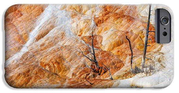 Prehistoric Trees IPhone Case by Todd Klassy