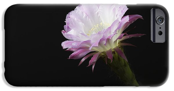 Princess Anne In Bloom IPhone Case by Ruth Jolly