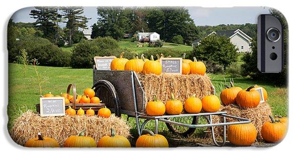 Pumpkin Sale IPhone Case by Jane Rix