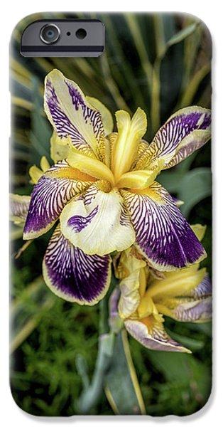 Purple And Yellow Iris IPhone Case by John Haldane