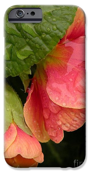 Raindrops On Coral Flowers IPhone Case by Carol Groenen