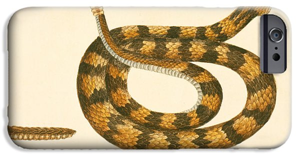 Rattlesnake IPhone 6s Case by Mark Catesby