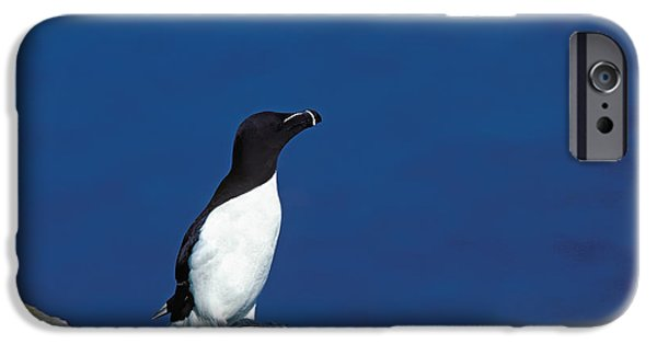 Razor-billed Auk Alca Torda IPhone 6s Case by Gerard Lacz