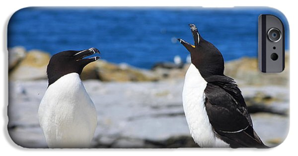Razorbills Calling On Island IPhone 6s Case by John Burk