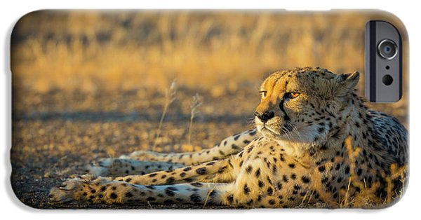 Reclining Cheetah IPhone 6s Case by Inge Johnsson