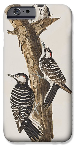 Red-cockaded Woodpecker IPhone Case by John James Audubon