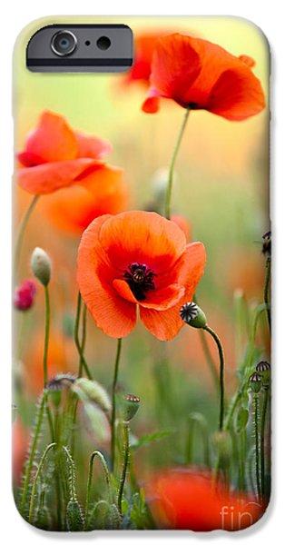 Red Corn Poppy Flowers 06 IPhone Case by Nailia Schwarz