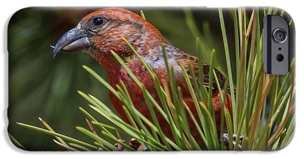 Red Crossbill IPhone Case by Michael Cunningham